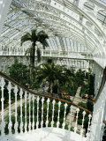 Interior of the Temperate House, Restored in 1982, Kew Gardens, Greater London Photographic Print by Richard Ashworth