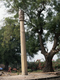 The Heliodorus Pillar, Vidisha, Madhya Pradesh State, India Photographic Print by Richard Ashworth