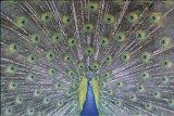 Colores verdaderos Pósters por Larry Ulrich