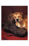 Dog Sleeping on Shoes Art