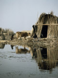 Village in the Marshes, Iraq, Middle East Photographic Print by Richard Ashworth
