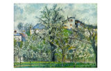 Potager, Arbres en Fleurs, c.1830-1903 Posters par Camille Pissarro