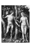 Adam and Eve, c.1504 Posters by Albrecht Dürer