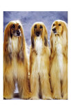 Dogs Standing Up Prints