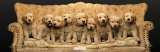 Golden Pup Line-Up Kunstdrucke von Keith Kimberlin