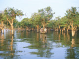 Mangroves at End of Lake Tonle Sap, Near Siem Reap, Cambodia, Indochina, Southeast Asia Photographic Print by Richard Ashworth