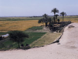 Landscape Near Luxor, Egypt, North Africa, Africa Photographic Print by Richard Ashworth