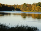 Lake, Autumn, Virginia Water, Surrey, England, United Kingdom Photographic Print by Charles Bowman