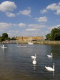 Swans and Sculls on the River Thames, Hampton Court, Greater London, England, United Kingdom Photographic Print by Charles Bowman