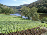 Lettuce Cultivation in Foreground, Near Port d'Acres, Midi-Pyrenees, France Photographic Print by Richard Ashworth