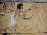 Wall Painting Showing Harvesting Grain, Tomb of Sennejem, Deir El Medina Photographic Print by Richard Ashworth