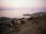 Shepherd Boy Taking Goats to Graze on the Hills Below Chora, Patmos, Dodecanese Islands, Greece Photographic Print by David Beatty