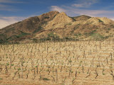Vineyards Near Corte, Corsica, France Photographic Print by Michael Busselle