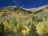 Aspen Trees, Independence Pass, Colorado, USA Photographic Print by Jean Brooks