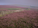 Moors Near Grinton, Yorkshire, England, United Kingdom Photographic Print by Michael Busselle