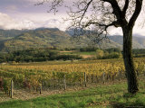 Vineyards Near Chambery, Savoie, Rhone Alpes, France Photographic Print by Michael Busselle