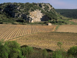 Vineyards Near Pezenas, Herault, Languedoc-Roussillon, France Photographic Print by Michael Busselle