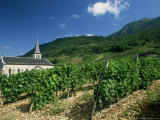 Jonjieux (Jonzieux), Savoie Vineyards, Rhone Alpes, France Photographic Print by Michael Busselle