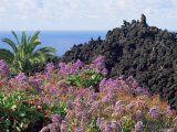 Roadside Flowers, La Palma, Canary Islands, Spain Photographic Print by Jean Brooks