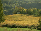 Vineyards in Autumn, Near Arbois, Jura, Franche Comte, France Photographic Print by Michael Busselle