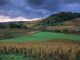 Vineyards Near Chateau Chalon, Jura, Franche Comte, France Photographic Print by Michael Busselle