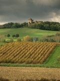 Vineyards Near Lons Le Saunier, Jura, Rhone Alpes, France Photographic Print by Michael Busselle