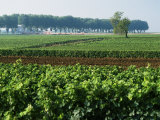 Cotes De Beaune Vineyards Near Beaune, Burgundy, France Photographic Print by Michael Busselle
