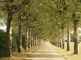 Country Road Near Macon, Burgundy, France Photographic Print by Michael Busselle