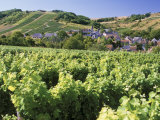 Vineyards at Bue, Near Sancerre, Loire Centre, France Photographic Print by Michael Busselle
