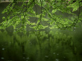Beech Leaves Over Lake, Waggoners Wells, Grayshot, Surrey, England, United Kingdom Photographic Print by Pearl Bucknall