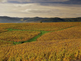 Vineyards Near Lentigne, Beaujolais-Rhone, Rhone Alpes, France Photographic Print by Michael Busselle