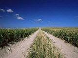 Straight Path Through Field, Hampshire, England, United Kingdom Photographic Print by Jean Brooks
