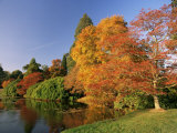 Acer Trees in Autumn, Sheffield Park, Sussex, England, United Kingdom Photographic Print by Michael Busselle