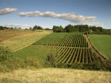 Vineyards Near Geaune, Tursan, Landes, Aquitaine, France Photographic Print by Michael Busselle