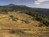 Vineyards Near Valreas, Vaucluse, Provence, France Photographic Print by Michael Busselle