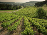 Vineyards Near Coiffy Le Haut, Haute Marne, Champagne, France Photographic Print by Michael Busselle