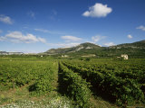 Vineyards Near Beaumes De Venise, Vaucluse, Provence, France Photographic Print by Michael Busselle