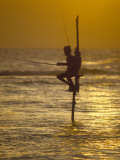 Stilt Fisherman (Pole Fisherman), Sri Lanka Photographic Print by Michael Busselle