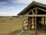 Garlic Drying, Near Condom, Gascony, Midi Pyrenees, France Photographic Print by Michael Busselle