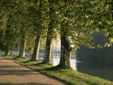 Plane Trees Beside the River Saone Near Macon, Saone Et Loire, Burgundy, France Photographic Print by Michael Busselle
