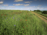 Landscape Near Clecy, Basse Normandie (Normandy), France Photographic Print by Michael Busselle