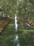 Canal De Brienne, Town of Toulouse, Haute Garonne, Midi-Pyrenees, France Photographic Print by Bruno Barbier