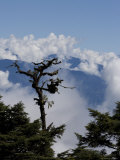 Trees and the Himalayas, Bhutan Photographic Print by Angelo Cavalli