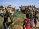 Nuer Women Carrying Sorghum, Gambella Region, Ilubador State, Ethiopia, Africa Photographic Print by Bruno Barbier