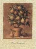 Joaquin Moragues - Pear Tree Obrazy