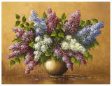 Syringa Prints by Helmut Glassl