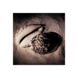 Cowrie Print by Laurel Wade