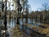 Sam Houston Jones State Park, Lake Charles, Louisiana, USA Photographic Print by Ethel Davies
