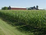 Farm, North Wood Park, Wisconsin, USA Reproduction photographique par Ethel Davies