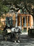 Savannah, Georgia, USA Photographic Print by Ethel Davies